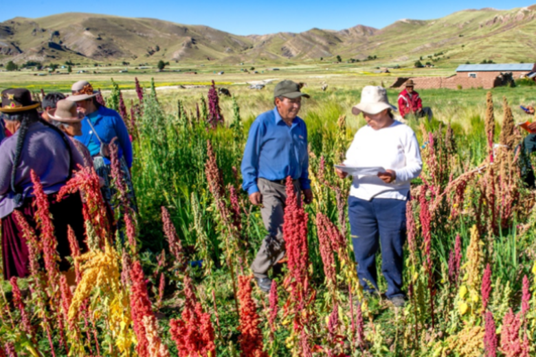 Alexander Wankel on Quinoa farm